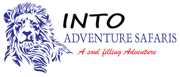 Into Adventure Safaris
